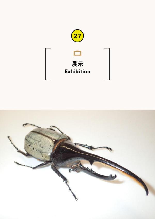 ミニ企画展「集まれ!世界の巨大昆虫」